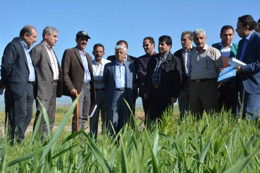 خروج و صادرات گندم و آرد ممنوع است/  امسال برای چهارمین سال پیاپی در تولید گندم خودکفا هستیم